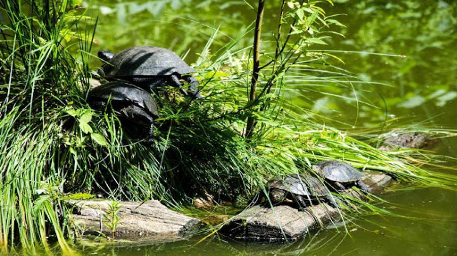 ścieżka Mały żółwik